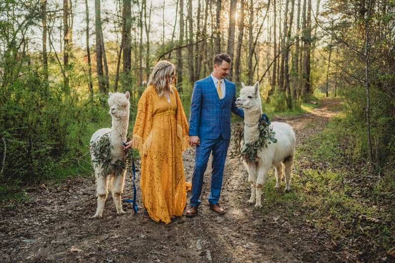 Alpacas, Chattanooga TN, storytelling images